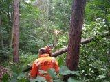 Nebezpečné stromy v lese Šemberk 1.6.2021